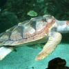 Hoboken 4th-Grader Helps Gulf Coast Creatures